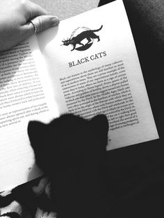 *Black cat  reading about black cats!!