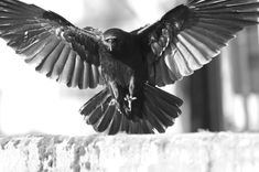 thecrowtographer on Instagram