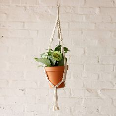 You cannot go wrong with a classic pairing of a Terracotta Pot and Macrame Hanger. This stunning pair is now available on our store  Seen here with our new Prayer Plant Kerchoveana (also available on our store!) .------------------------------- #plantify #urbanplantery #letlifein #plantspiration #plantgang #indoorplantclub #plantporn #urbanjungle #urbanjunglebloggers #capetownliving #indoorplants #indoorwilding #indoorgarden#classic #throwback #terracotta #macrame #macramehanger…