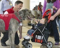 In this photo taken May 21, 2013, Pets Unstressing Passengers volunteer Brian Valente and his dog, Finn, greet fliers at Los Angeles International Airport. The therapy dogs are intended to take the stress out of travel: the crowds, long lines and terrorism concerns. (AP Photo/Damian Dovarganes) #Dogs #Flying #Pets_Unstressing_Passengers
