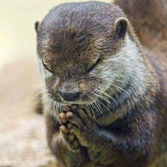 Dear God, please help me through another week. I love you.   Otter Always Love YOU