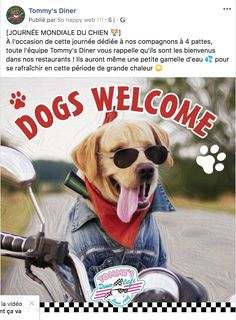 Dogs Welcome - Tommy's Diner Dogs, Animals, International Cat Day, Calendar, Animales, Animaux, Pet Dogs, Doggies, Animal