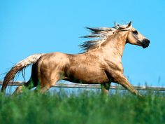E-type Hold Your Horses, good song. Majestic Horse, Beautiful Horses, Animals Beautiful, Missouri Foxtrotter, Horse Wallpaper, Wallpaper Backgrounds, Horse Riding Clothes, E Type, Illustrations