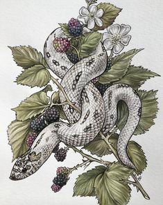 Hognose snake watercolor by v. Snake Painting, Snake Drawing, Snake Art, Tattoo Drawings, Body Art Tattoos, Art Drawings, Inspiration Art, Art Inspo, Skink Tattoo