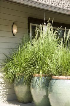 Privacy ... no solid fence needed. A trio of Ali-Baba-scale pots, each planted with a n ornamental grass, creates a kinder, gentler barrier with style.