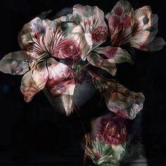 Blooms 2 #blooms #flowers #rijksmuseum #face #portrait #woman #moody #blend #xocolate7...