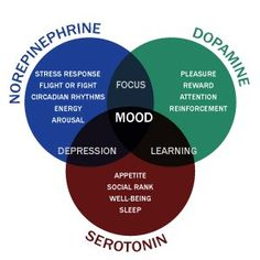 Serotonin and Dopamine Relationship, Function and Differences. How these neurotransmitters affect happiness & how to increase with supplements. Brain Health, Mental Health, Brain Facts, Nutrition Sportive, Brain Science, Science Education, Health Education, Physical Education, Stress