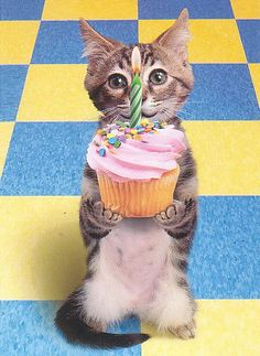 Birthday Wishes , Birthday Messages, Birthday Greetings and Birthday Quotes Happy Birthday Pictures, Happy Birthday To Us, Cat Birthday, Happy Birthday Greetings, Cupcake Birthday, Happy Birthday Animals, Birthday Ideas, Free Birthday, Happy Party