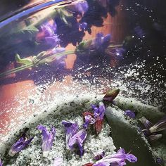 Aromatic herbal salt experiments.  First up pretty purple sage blossoms...next the bright yellow blossoms of Jerusalem Sage.~ Danielle