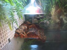 Turtle Tank With Diy Home Made Basking Platform Turtle