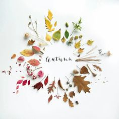 Well since the weather has decided so and my garden is full of leaves, I'm declaring Autumn. Seasons Months, Seasons Of The Year, Months In A Year, Autumn Day, Hello Autumn, Autumn Poem, Autumn Inspiration, Creative Inspiration, Autumn Flatlay