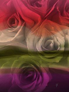 Roses 3a Art Print #art #floral #flowers #roses #print #home #decor #office #design #wallart #nature #garden