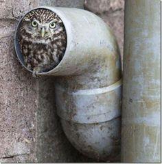 Modern nest!