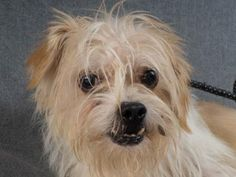 Adopt Denver, a lovely 2 years Dog available for adoption at Petango.com…