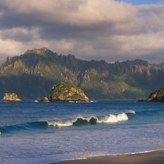 On This Remote New Zealand Island, Kiwi Birds Roam and the Ferns Predate Dinosaurs Kiwi Bird, Ferns, New Zealand, Remote, River, Island, Dinosaurs, Outdoor, Dreams