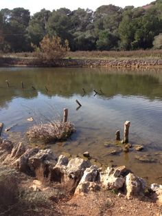Parc natural de Mondragó (Santanyí)