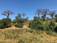 Itinéraire de notre Road-trip Afrique du Sud – Mozambique Road Trip, Station Balnéaire, Africa, Country Roads, Plants, Travel, South Africa, Archipelago, Viajes