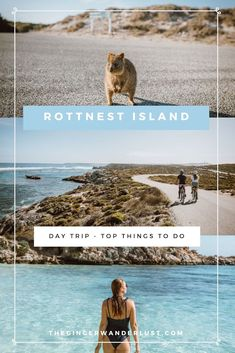 Day Trip to Rottnest Island - Top Things To Do - The Ginger Wanderlust - 2020 World Travel Populler Travel Country Australia Travel Guide, Perth Australia, Visit Australia, Western Australia, Australia Destinations, Great Barrier Reef, Scuba Diving Australia, Australia Animals, Quokka