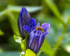 blue flower and bee - Google