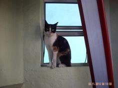 """La mejor foto de """"Manchita"""", tenia que ser un gato! (o en su caso ... gata)."""