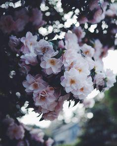 In Bloom 🌸