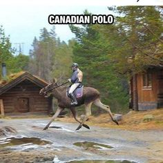 Meanwhile in Canada. Looking at the lighter side of life in Canada. Don't miss 40 Funny meanwhile in Canada photos that will blow your mind. - Page 4 of 8 Funny Images, Funny Pictures, Moose Pictures, Random Pictures, Funny Pics, Meanwhile In Canada, Funny Animals, Cute Animals, Wild Animals