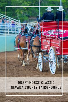 Nevada County Fairgrounds welcomes the Draft Horse Classic, September 2020 City Events, Local Events, Andalusian Horse, Friesian Horse, Arabian Horses, Palomino, Grass Valley, Nevada City