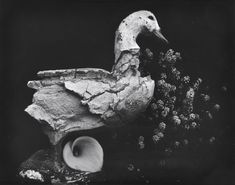 Edward Weston (American, 1886-1958) Duck and Lily, 1939