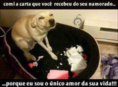 ❤️❤️❤️❤️❤️❤️ #amocachorro  #cachorro  #cachorroétudodebom  #filhode4patas  #gatos  #petmeupet