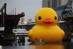 A giant rubber duck floats in Darling Harbour ahead of the Sydney Festival