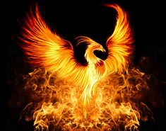 Phoenix Trading Strategies | Strategic Knowledge and Information ...