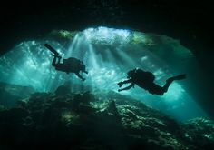 2013 Underwater Photography Contest Finalists AMAZING pictures