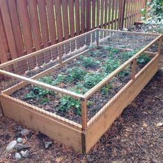 Strawberry Cage