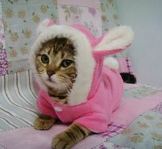 Kittens In Clothes | Pet Dog And Cat Clothing Rabbit - US$6.99 : OnlineShoppingLife