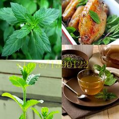 Aromatic plant seeds  piperita seeds, spearmint pepper mint seeds //Price: $7.95 & FREE Shipping //     #vegetable