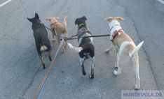 A pack full of dogs - Handling and training of a pack full of dogs. The pack in the nature, problems with new arrivals and separations, training and feeding. Group Dynamics, Young Animal, Two Dogs, Best Dogs, Hunting, Puppies, Animals, Dreams, Baby Cubs