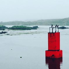 A splash of colour on a misty gray day. Pulling in to the harbour at #rossaveal #connemara #cogalway #grayskies #splashofred #birds #sky #sea #ferrytrip #aran #inismor