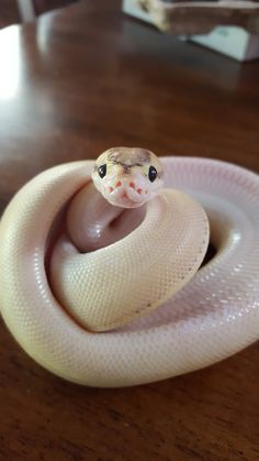 Welcome to Snell (snake hell) — i cannot emphasize the Cute enough.