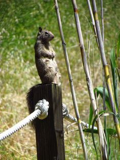 Squirrel pose!  photo by Meg Solaegui at Wilbur Hot Springs    1800 acre Nature Preserve, Hot Mineral Springs and Lodging.