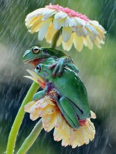 27 superb images from the National Geographic Traveler Photo Contest Frog BFF's huddle under their daisy umbrella! Animals And Pets, Baby Animals, Funny Animals, Cute Animals, Beautiful Creatures, Animals Beautiful, Beautiful Cats, Animal Pictures, Cute Pictures