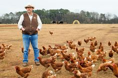 If the Southern organic crowd were made up of teenage fan girls, William Harris III of White Oak Pastures would be their Justin Bieber. (Photo: Amber Fouts for The New York Times)