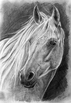 white horse, pencil -ispyhorsecam -decipher sig