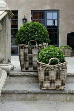 Korb mit Buchsbaum