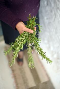 Wild Rosemary  30 gr   Greece by TheSpartanTable on Etsy