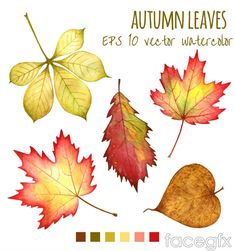 5 watercolor autumn leaf design vector