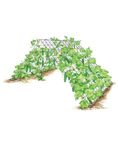 Deluxe Cucumber Trellis, from Gardener's Supply - I can't wait to use this for all of my climbing vegetables next spring, and I'll grow my lettuces and other delicate crops underneath!