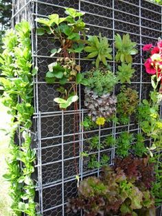 DIY Vertical Garden: support posts, chicken wire, Typar cloth and dirt