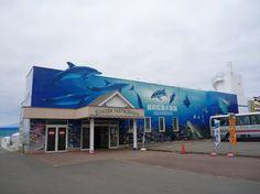 Echizen Matsushima Aquarium, Sakai: See 127 reviews, articles, and 90 photos of Echizen Matsushima Aquarium, ranked No.3 on TripAdvisor among 42 attractions in Sakai.