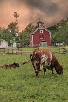 windmill, barn,,and cows..all 3 my fav
