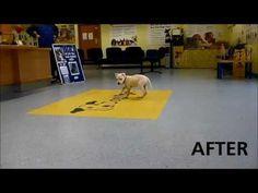Dogs Trust Leeds: Wonky (Juliette) Update - Before & After Footage
